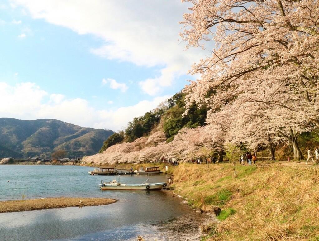 滋賀の春におすすめプロポーズスポットで海津大崎