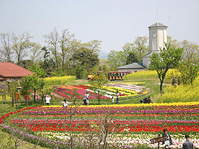 大阪gardenのサプライズプロポーズ 京都府農業公園