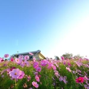 大阪gardenのサプライズプロポーズ 鷺ヶ峰コスモスパーク