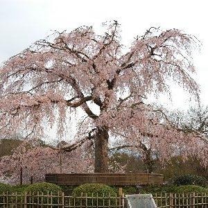 大阪のサプライズプロポーズ 円山公園