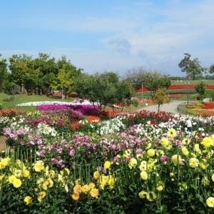 大阪gardenのサプライズプロポーズ 県営馬見丘陵公園