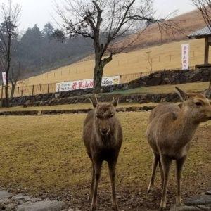 大阪gardenのサプライズプロポーズ 奈良公園