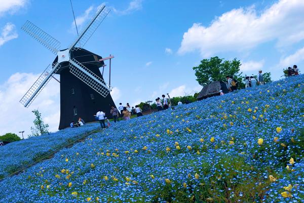 春のプロポーズは公園で花博記念公園